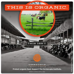 this-is-organic.cows