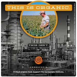 this-is-organic.soy