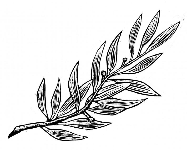 Olive Tree Design Studio
